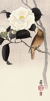 Canvas Print Ohara Koson - Songbird and Flowering Camellia