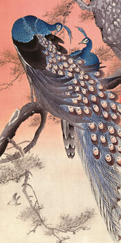 Canvas Print Ohara Koson - Two Peacocks on Tree Branch