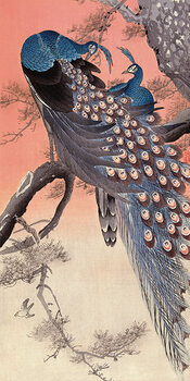 Ohara Koson - Two Peacocks on Tree Branch Canvas Print