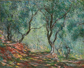 Olive Trees in the Moreno Garden; Bois d'oliviers au jardin Moreno, 1884 Canvas Print