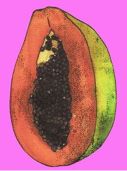 Papaya,2008 Canvas Print