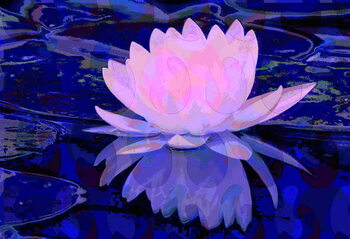 Canvas Print Pink Water Lily