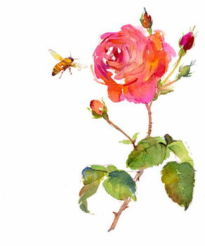 Rose with bee, 2014, Canvas Print