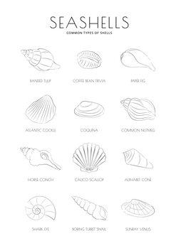 Canvas Print Seashells