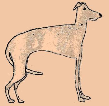 Skinny dog Canvas Print