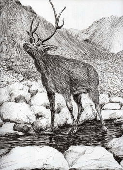 Canvas Print Stag, 2011,