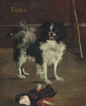 Tama, the Japanese Dog, c.1875 Canvas Print