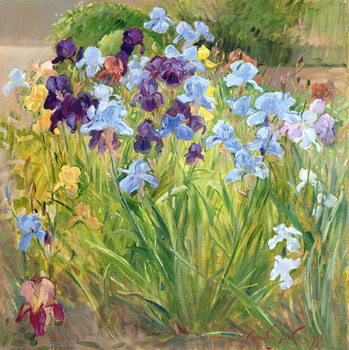 The Iris Bed, Bedfield, 1996 Canvas Print