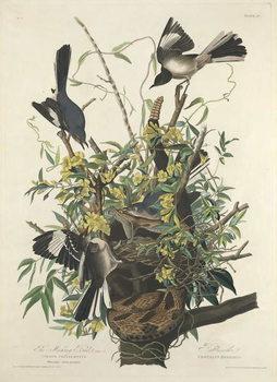 The Mocking Bird, 1827 Canvas Print