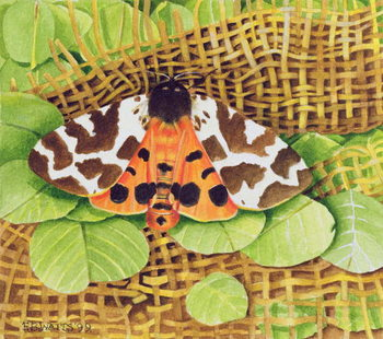 Tiger Moth, 1999 Canvas Print