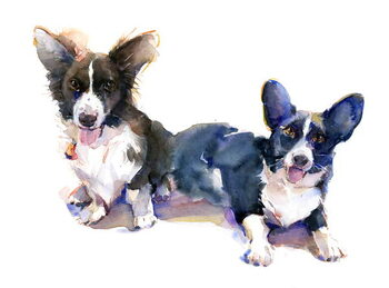 Canvas Print Two Corgis, 2015,