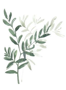 Canvas Print Watercolor laurel branch