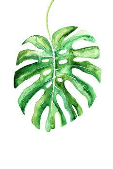 Watercolor monstera leaf Canvas Print