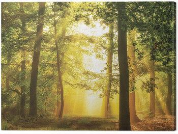 Lars Van De Goor - Hidden In Plain SIght Canvas Print
