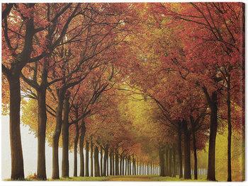 Lars Van De Goor - So Full Canvas Print