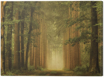 Lars Van De Goor - The Portal Canvas Print