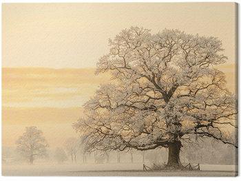 Lars Van De Goor - Winter Light Canvas Print