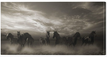 Malcolm Sanders - Wild Stampede Canvas Print