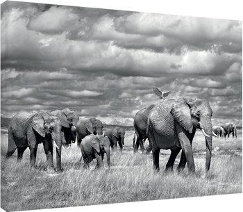 Marina Cano - Elephants of Kenya Canvas Print