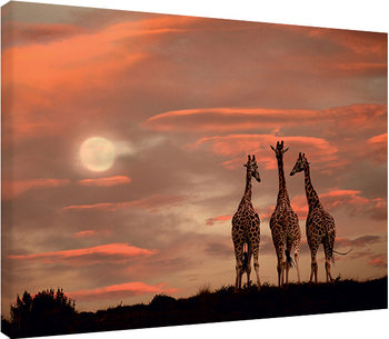 Marina Cano - Moonrise Giraffes Canvas Print