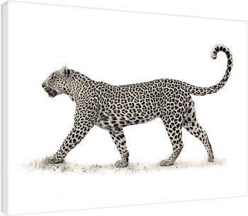 Mario Moreno - The Leopard Canvas Print