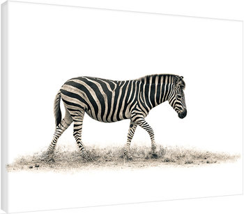 Mario Moreno - The Zebra Canvas Print