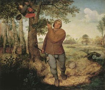 Peasant and Birdnester, 1568 Canvas Print