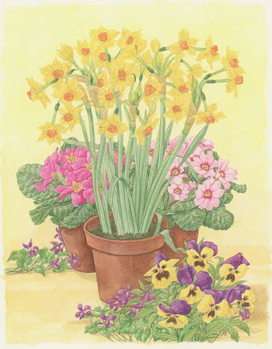 Pots of Spring Flowers, 2003 Canvas Print
