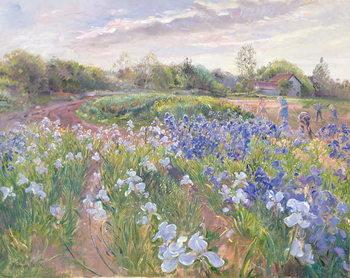Sunsparkle on Irises, 1996 Canvas Print