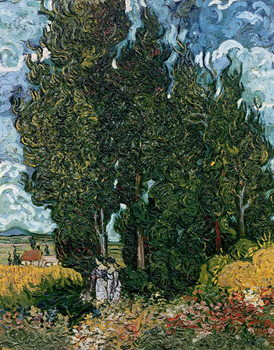The cypresses, c.1889-90 Canvas Print