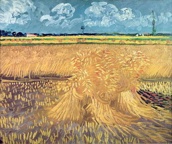 Wheatfield with Sheaves, 1888 Canvas Print