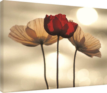 Yoshizo Kawasaki - Icelandic Poppies Canvas Print