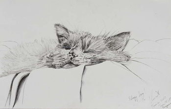 Canvas-taulu Monty sleepy boy, 2013,