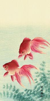 Canvas-taulu Ohara Koson - Two Veil Goldfish