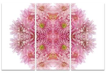Alyson Fennell - Pink Chrysanthemum Explosion Canvas-taulu