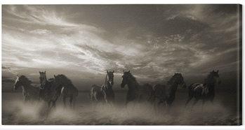 Malcolm Sanders - Wild Stampede Canvas-taulu
