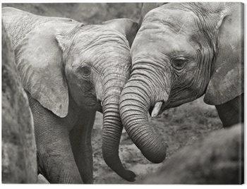 Marina Cano - Elephants in Love Canvas-taulu