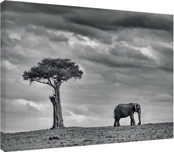Mario Moreno - Land of Giants Canvas-taulu