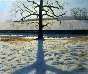 Tree and Shadow, Calke Abbey, Derbyshire Canvas-taulu