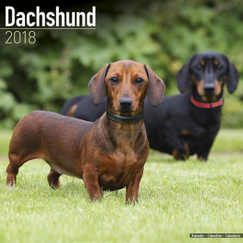 Calendar 2022 Dachshund