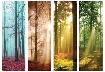 Papel de parede  4 Seasons In The Forest