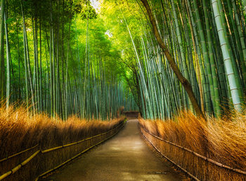 Papel de parede Bamboo - Path in the Forest