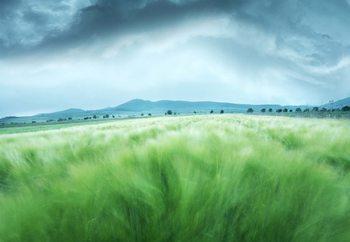 Papel de parede Barley Field
