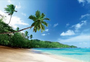 Papel de parede Beach - Palm