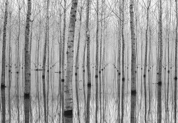 Papel de parede Birch Forest
