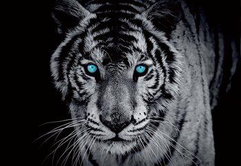 Papel de parede Black And White Tiger Blue Eyes