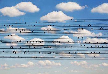 Papel de parede Cantus Arcticus, Concerto For Birds