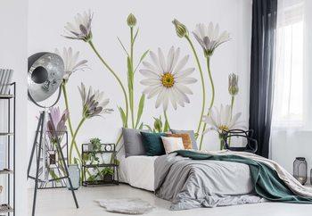 Papel de parede  Cape Daisies