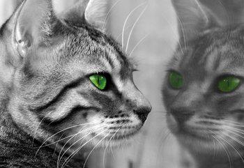 Papel de parede Cat Kitten