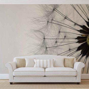 Papel de parede Dandelion